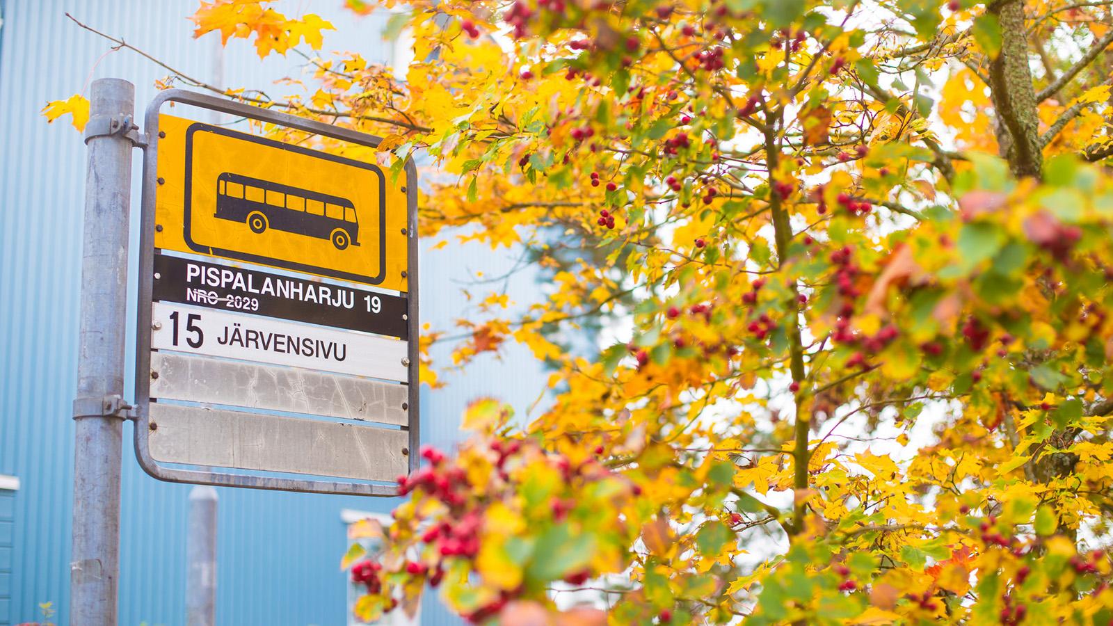 Bussipysäkki ja pihlaja syksyllä
