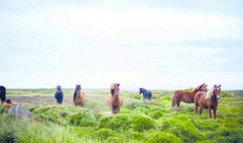 hevoset2