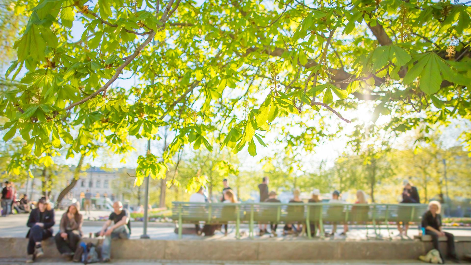 Vehreä Tampereen kaupunki kesällä. Kuva: Laura Vanzo