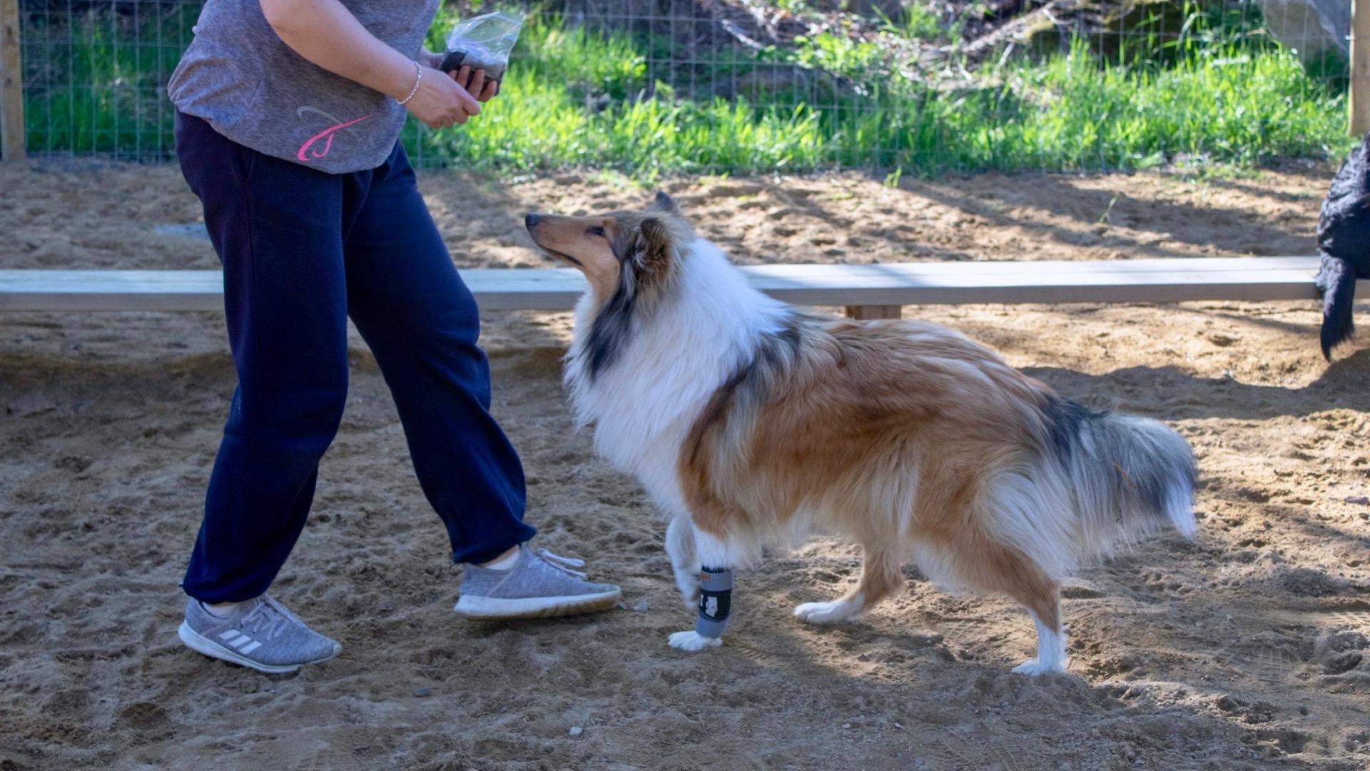 Vesilahti Dogdevelopin koirapuisto Hunsvottila